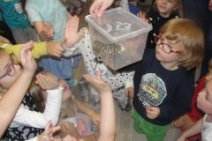 Spotkanie edukacyjne z udziałem żywych zwierząt - płazy.